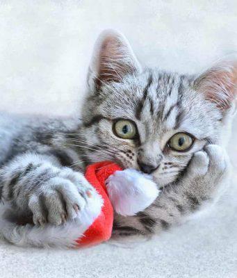 ricette natale 2019 gatti