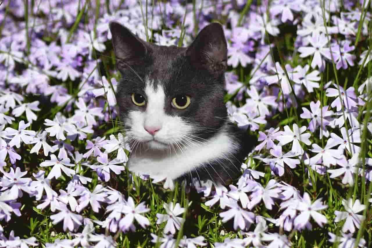 rimedi floreali micio