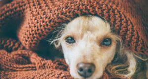 rimedi naturali raffreddore cane