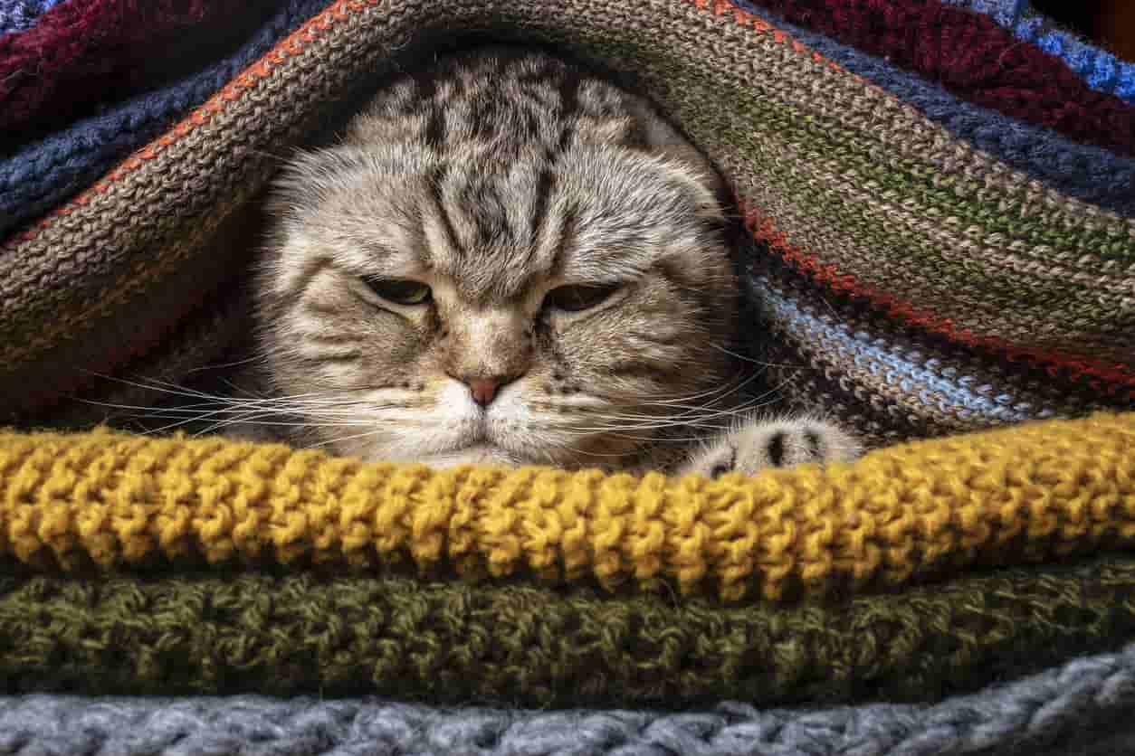 rimedi naturali raffreddore gatto