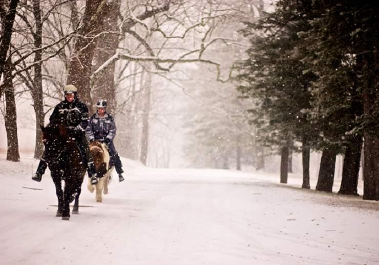 cavallo inverno