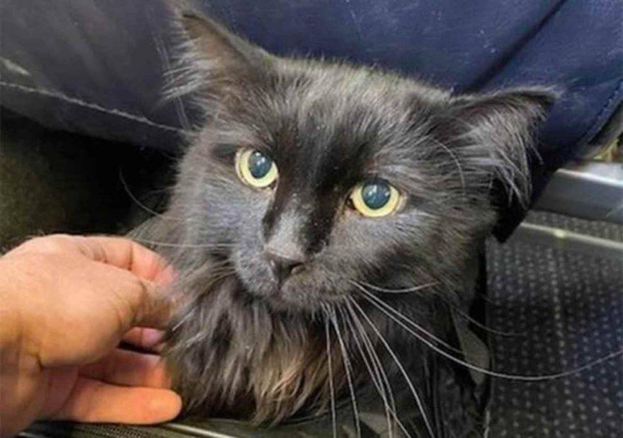 sasha gatto ritrovato