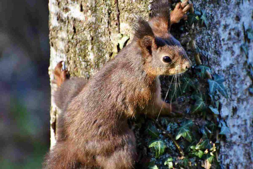 scoiattolo nella foresta
