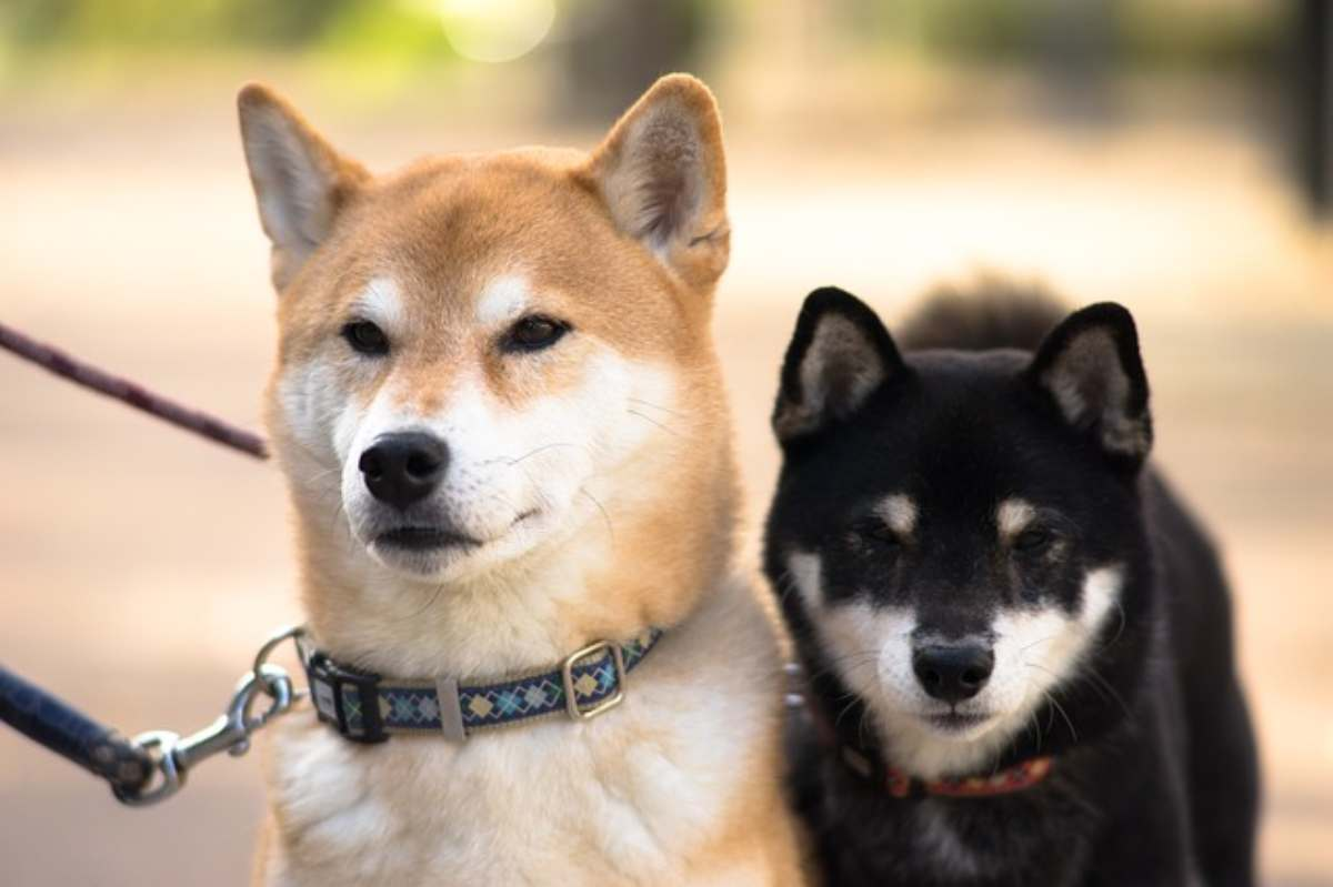 Oroscopo cane del segno del Capricorno