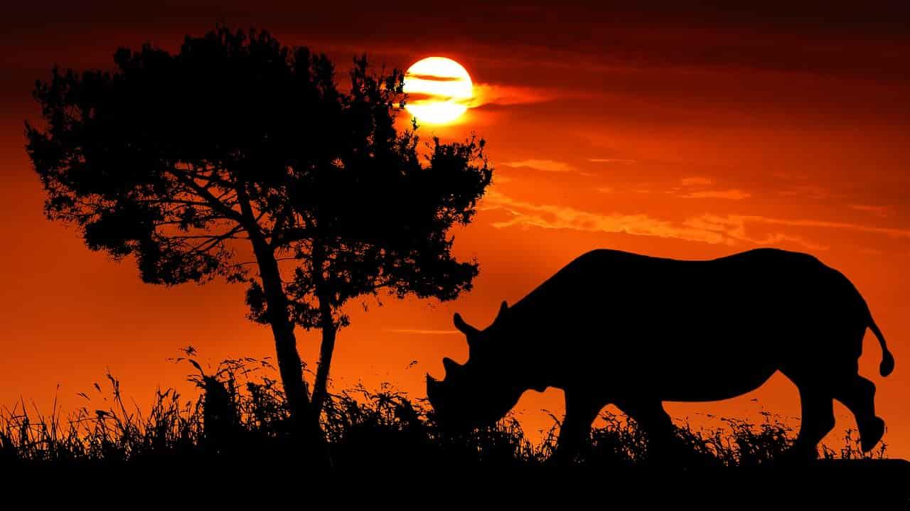 Rinoceronte al tramonto ( Foto Pixabay)