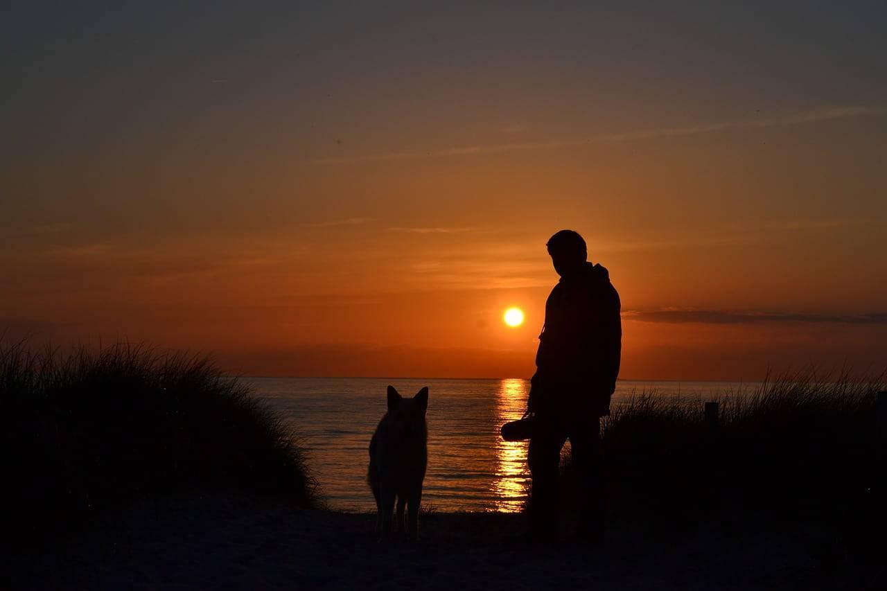Cane e padrone (Foto Pixabay)