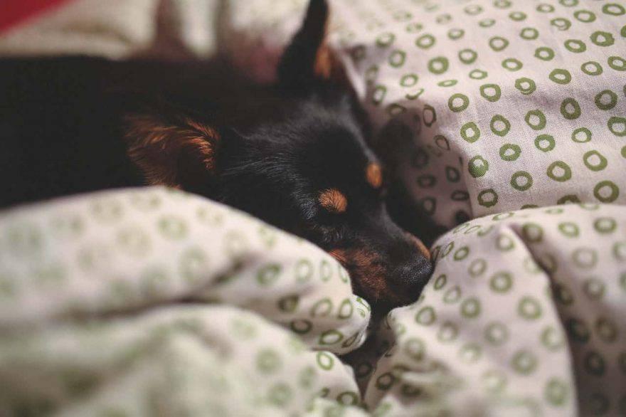 tenere lontano il cane dal letto