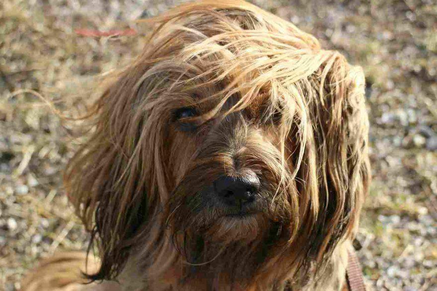 Regali di Natale per cani a meno di 10 euro