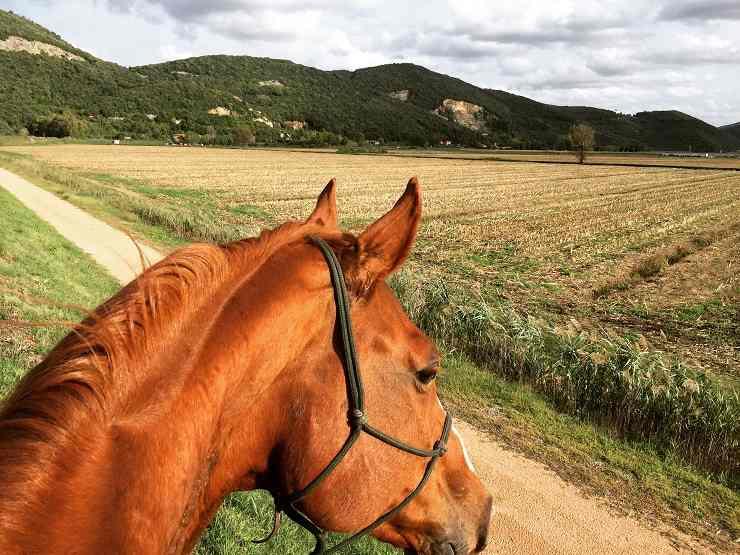 razze cavalli passeggiate