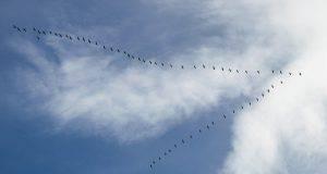 uccelli volano formazione V