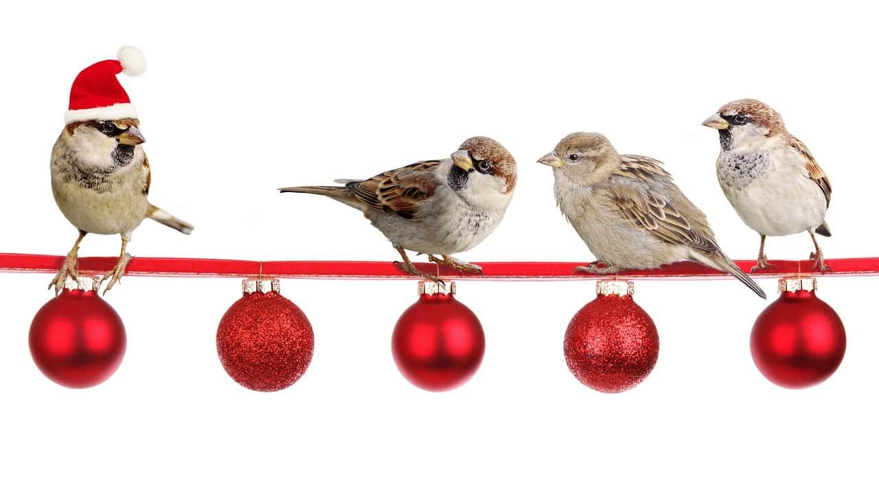 Uccelli e pericoli di Natale