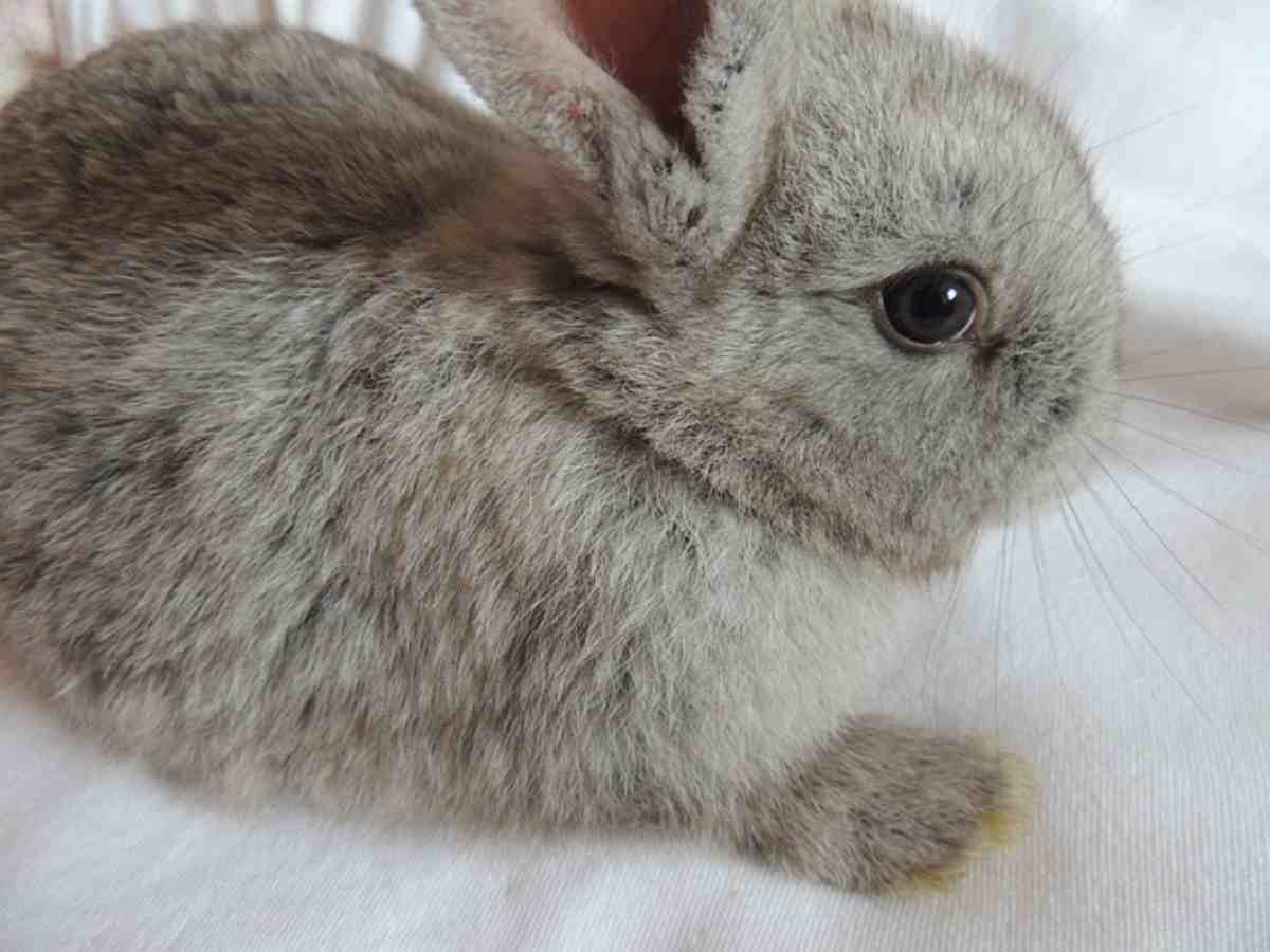 I cinque sensi del coniglio