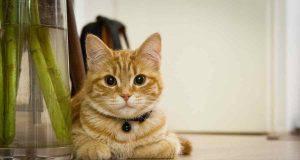 gatto casa appartamento