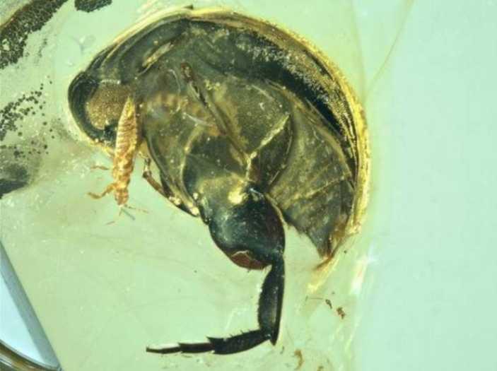 Primo caso impollinazione insetto impollinatore polline