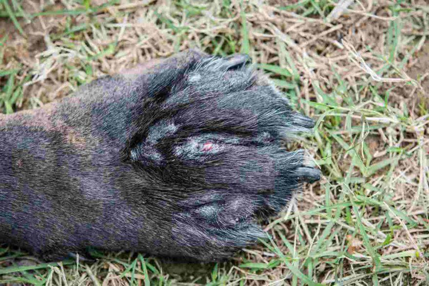 Problemi pelle nel cane