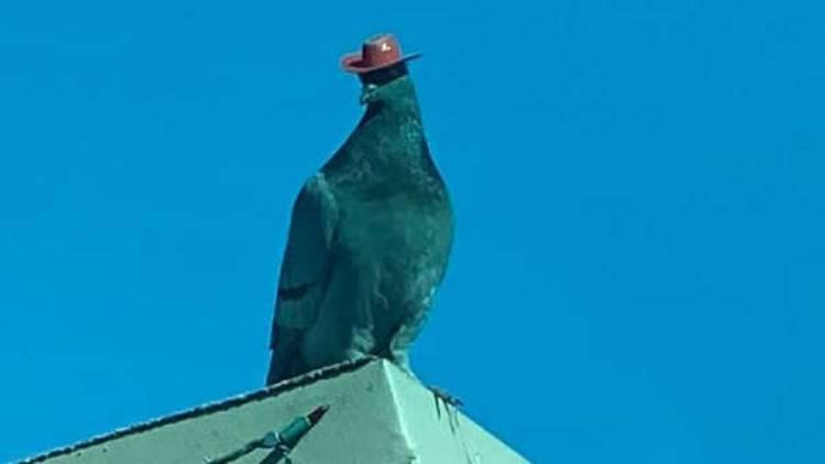 piccioni cappelli cowboy