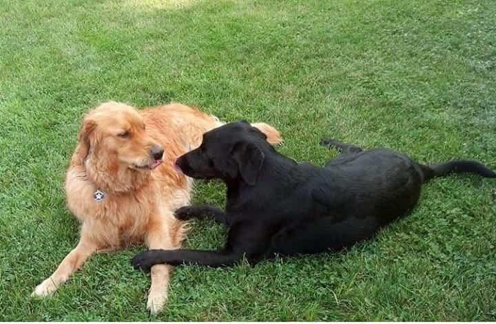 Cani innamorati (Foto Instagram)