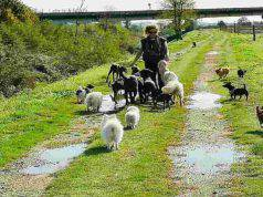 L'oasi per cani e gatti (Foto Compagnia Randagia Aps facebook)