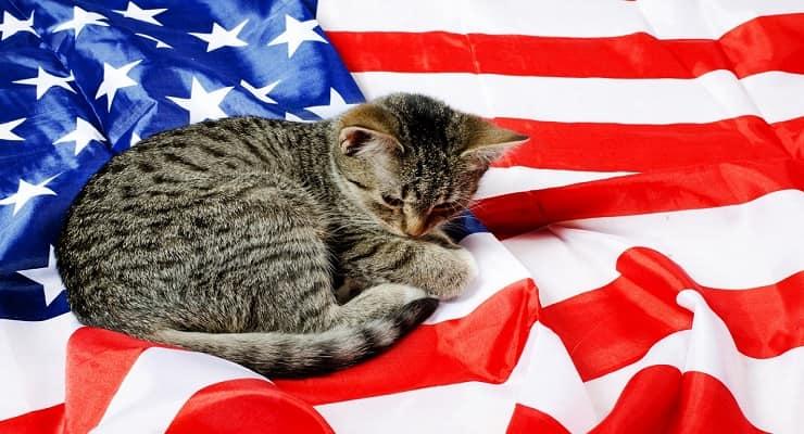 Nomi inglesi e americani per gatti
