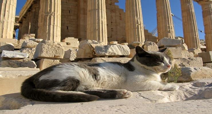Nomi di gatti mitologici