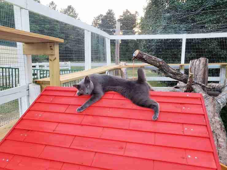 Un gatto rilassato (Foto Facebook)