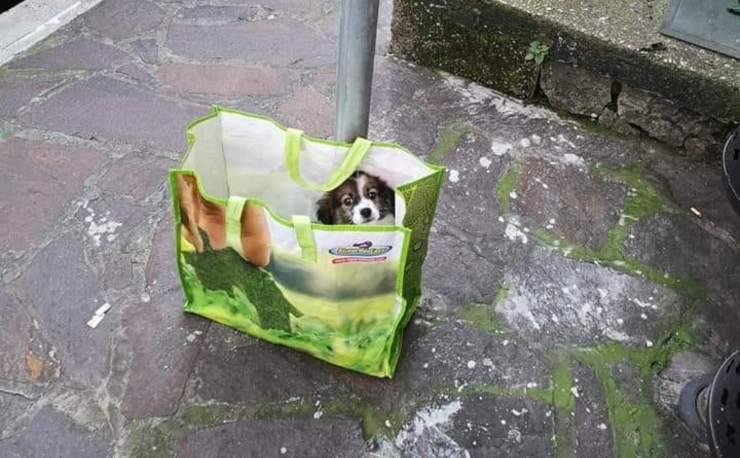 cucciolo abbandonato fermata bus