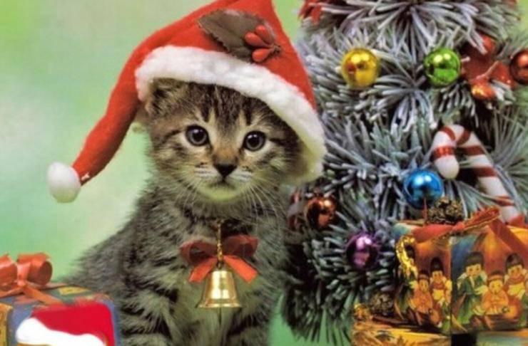 buona natale gatti