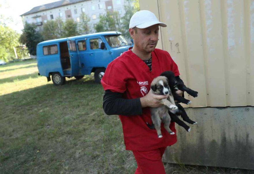 aiutare cani chernobyl