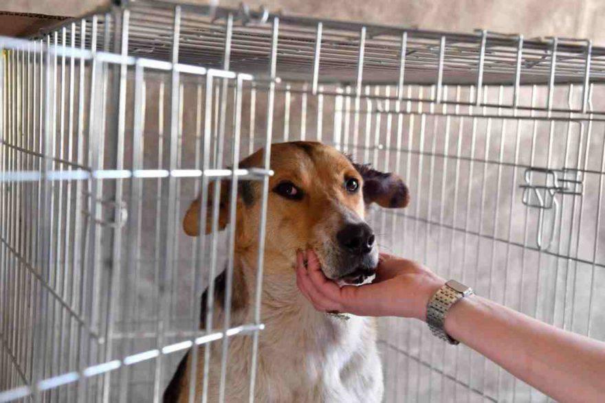 aiutare cani al freddo senza cibo
