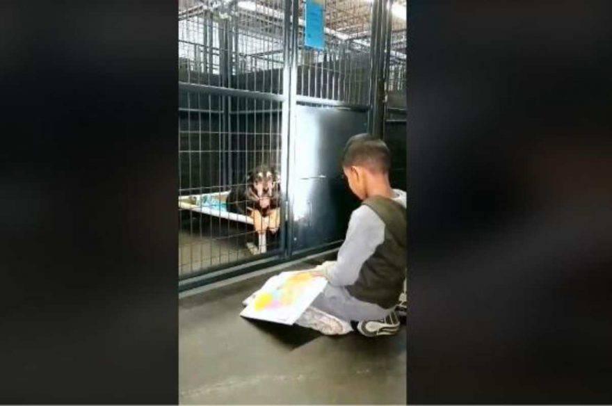 animali rifugi bambini lettura