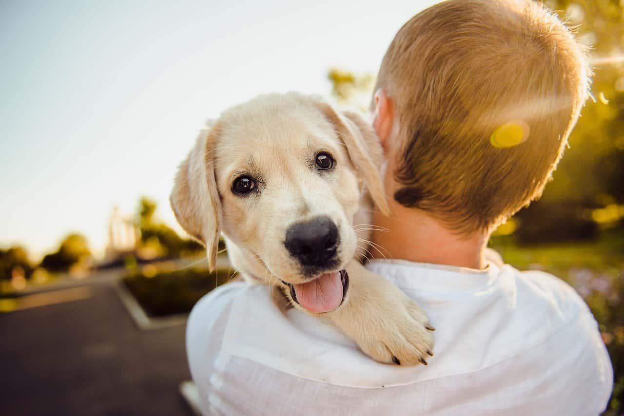 Cane e bambino (Foto Pixabay)