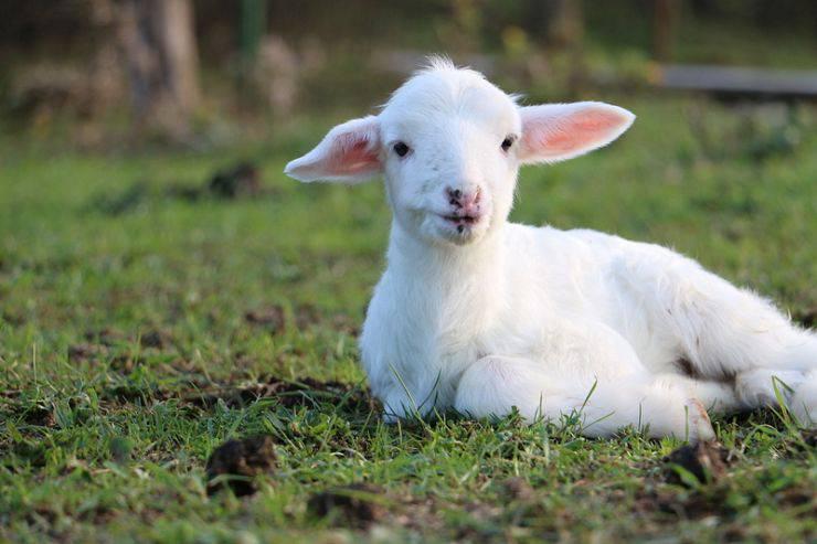 pelle agnello intimissimi