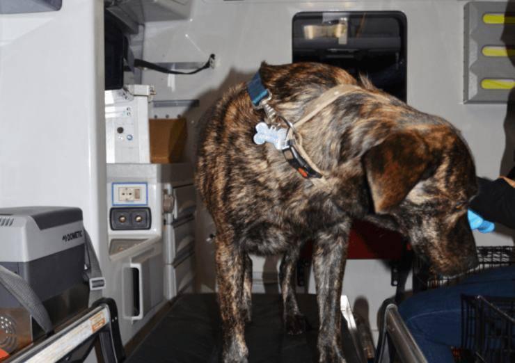 ambulanza veterinaria per gli animali