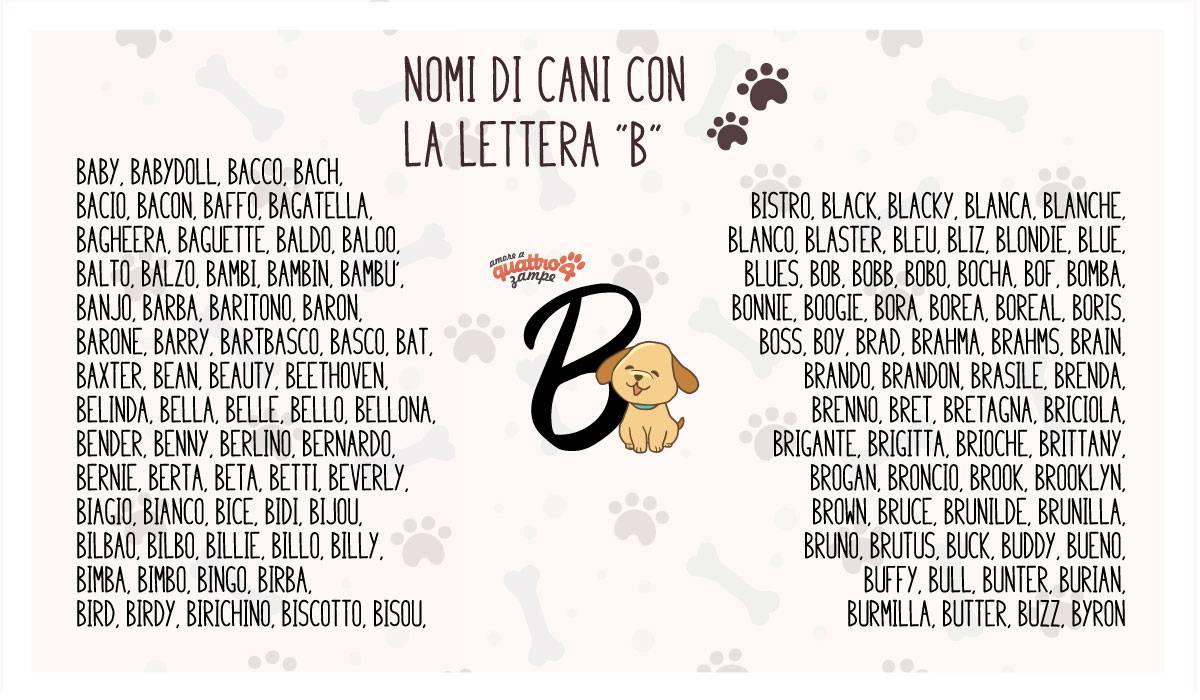 infografica nomi cane con la B