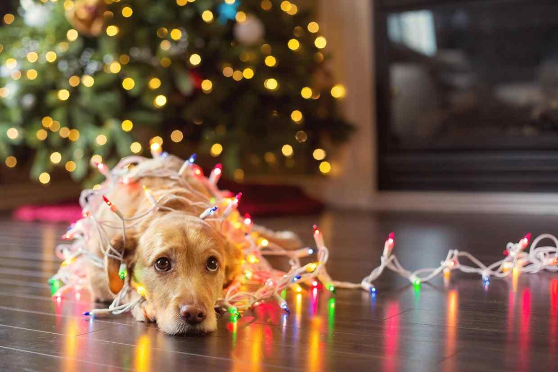 Animali Natale Immagini.Natale Con Gli Animali In Famiglia Come Renderli Felici