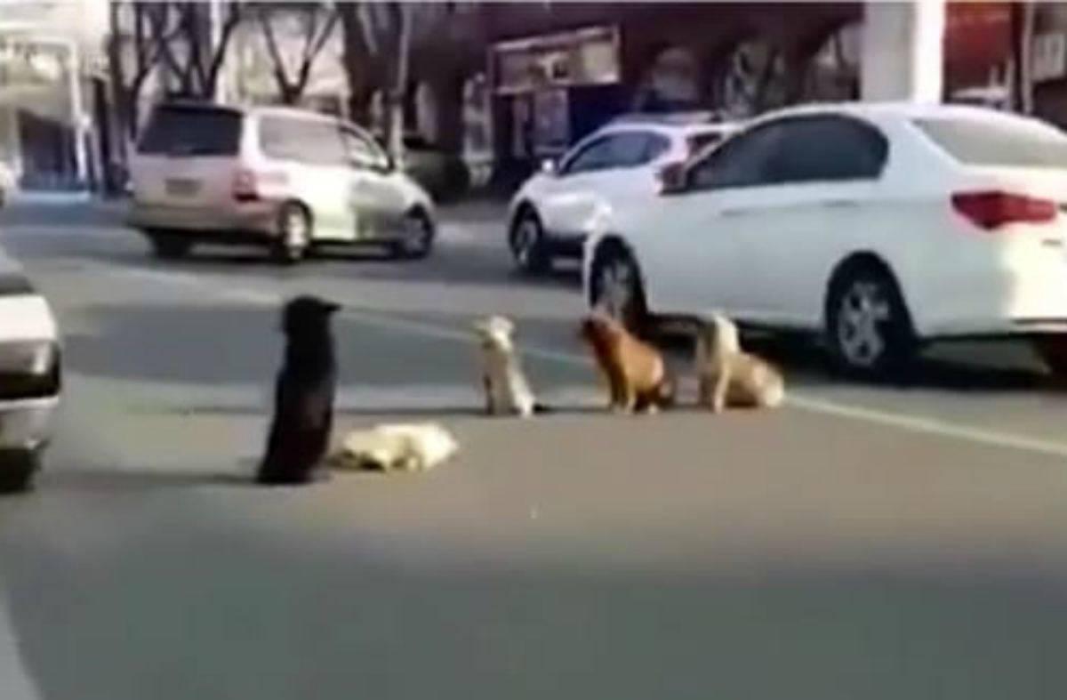 Cani per strada (Foto Video)