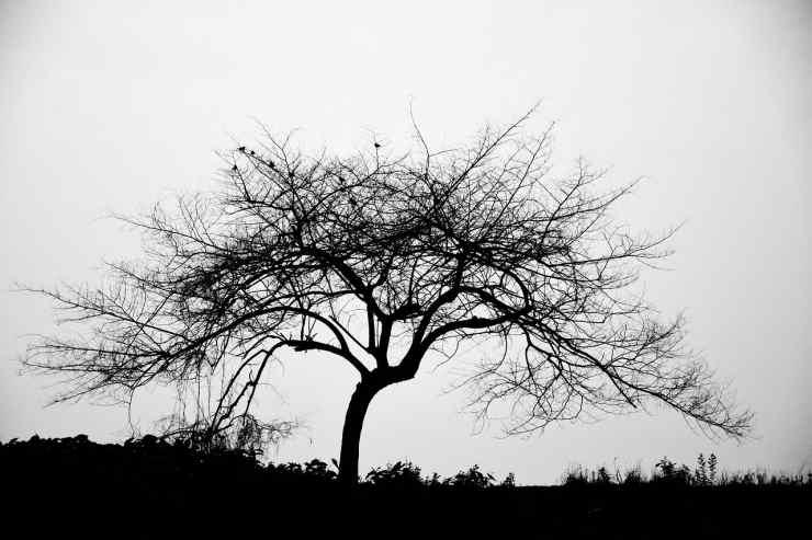 Albero spoglio (Foto Pixabay)