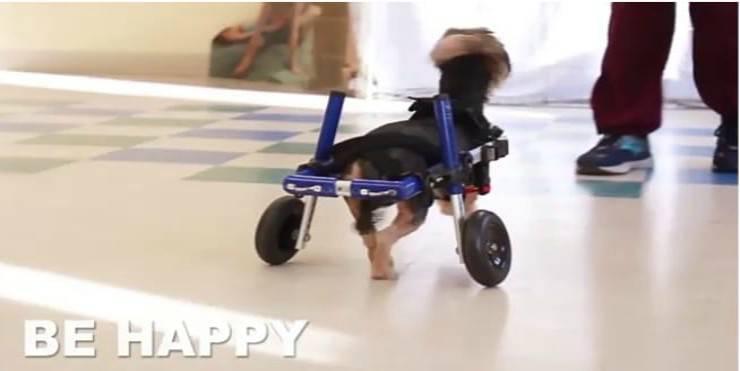 Cagnolina felice (Foto video Walkin'Pets)