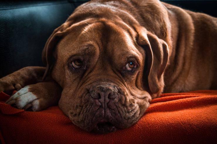 problemi di prostata nel cane video