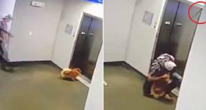 pericolo cane ascensore