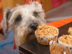 benefici dell avena nel cane