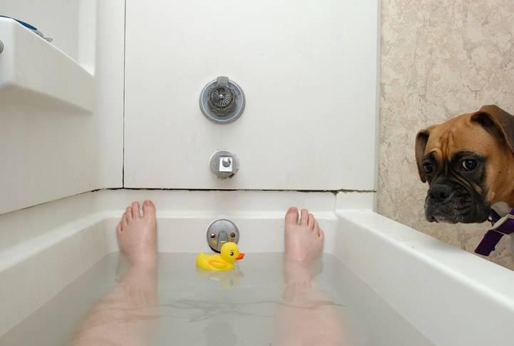 cane vi segue in bagno
