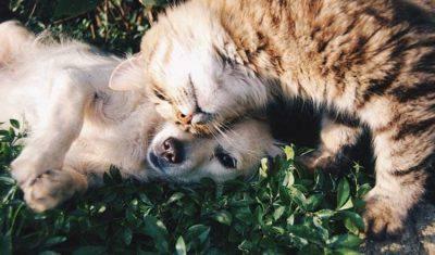 cane e gatto coronavirus