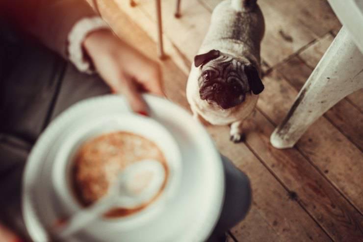 cane puo mangiare le zuppe