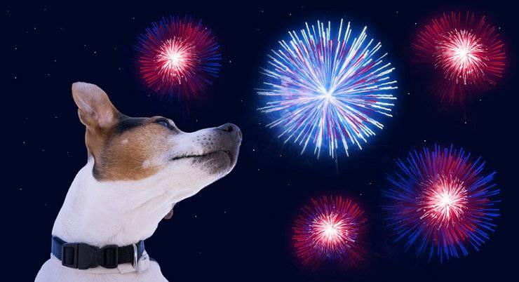 animali fuochi artificio