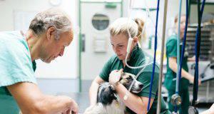 cane in cura