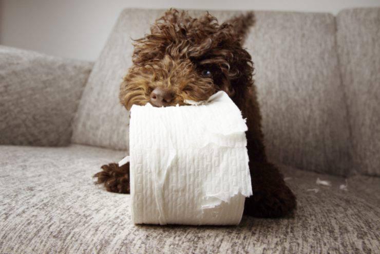 cane mangia carta