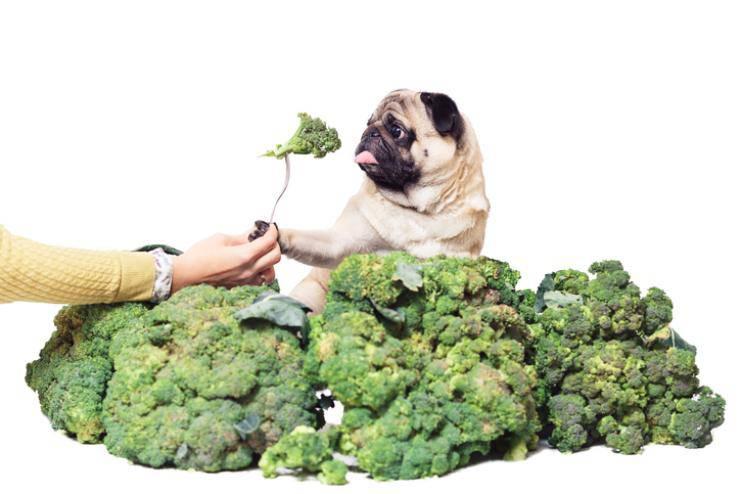 cane puo mangiare i broccoli