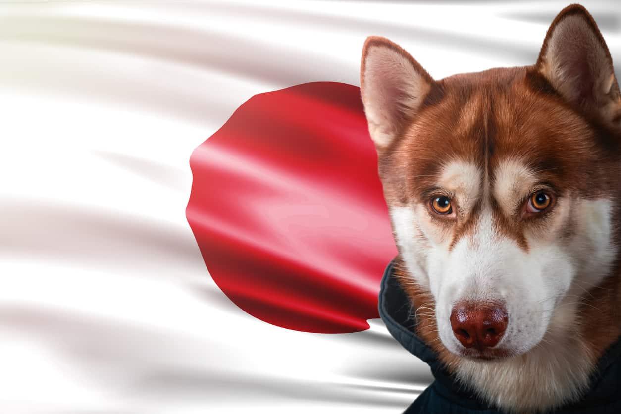 Nomi di cani giapponesi