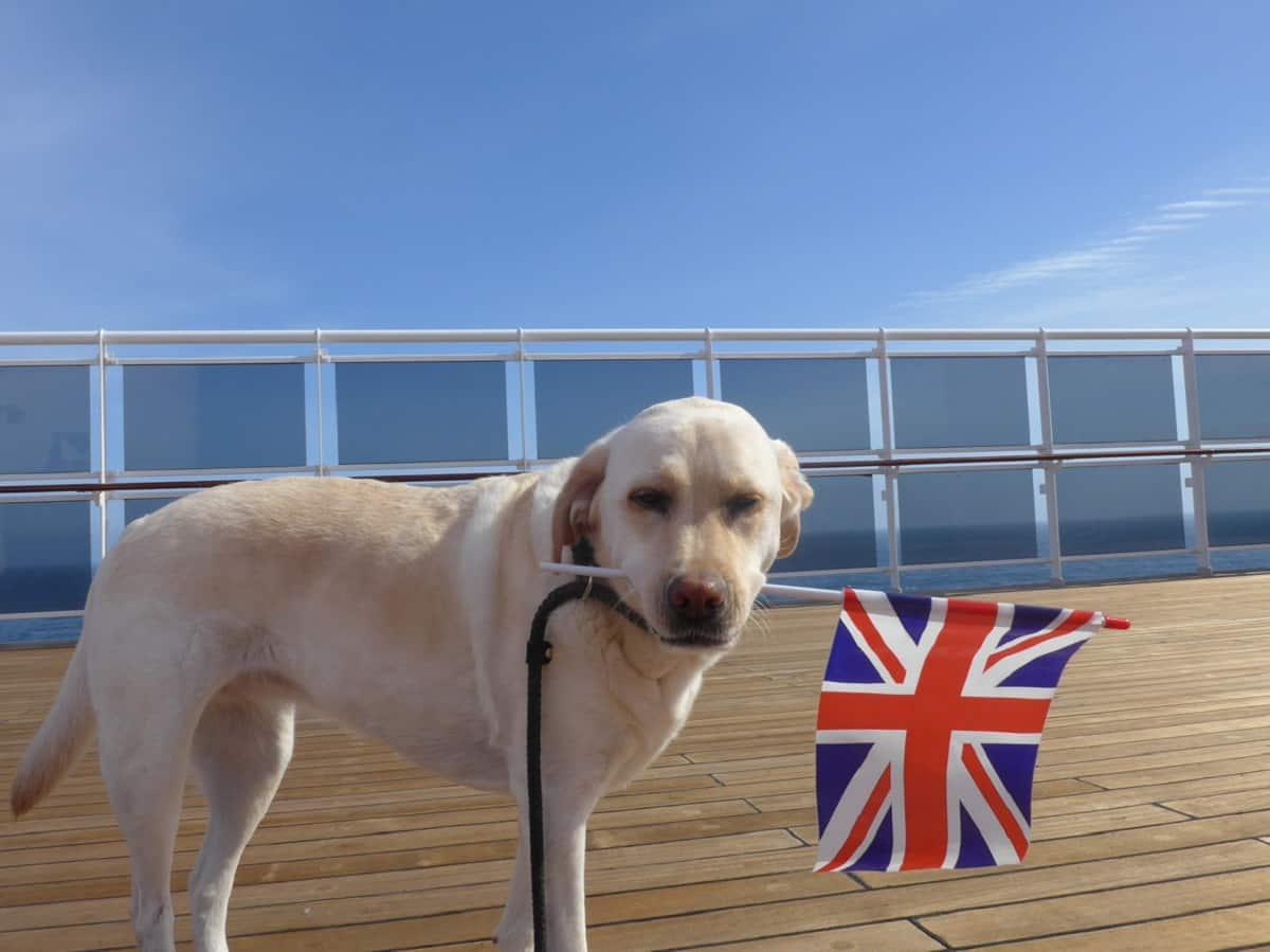 nomi inglesi e americani per cani